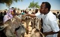 UNAMID supports livestock vaccination campaign in Darfur